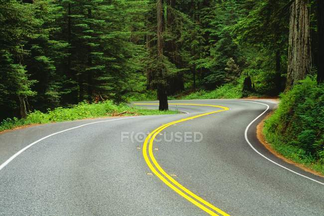Road Through Redwood Forest — Stock Photo