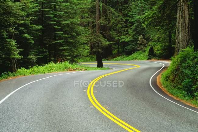 Дорога через Редвудский лес — стоковое фото