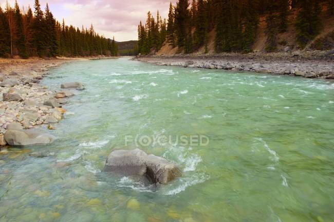 Moving River through forest — Stock Photo