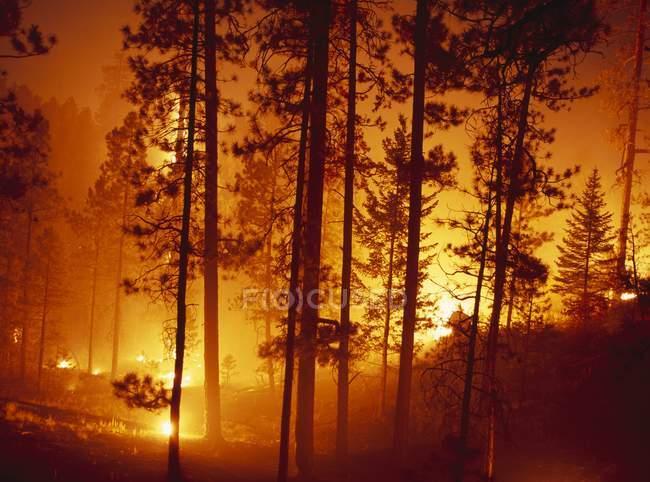 Controlled Burn, Jemez Mountains — Stock Photo