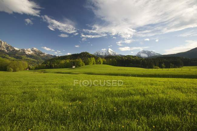 Alpine Meadow at Watzmann Mountain — Stock Photo