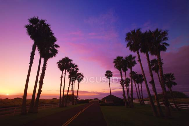 Sunset Over Road trees — Stock Photo