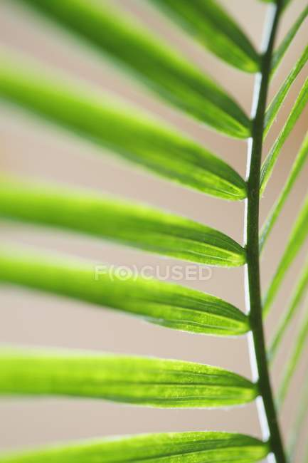 Leaves branching off a stem — Stock Photo