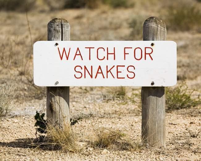 Reloj de serpientes signo - foto de stock