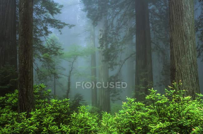 De manhã cedo na floresta — Fotografia de Stock