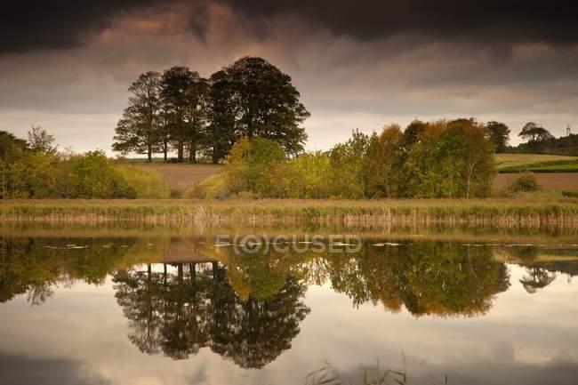 Дерева, що знайшло своє відображення у воді — стокове фото
