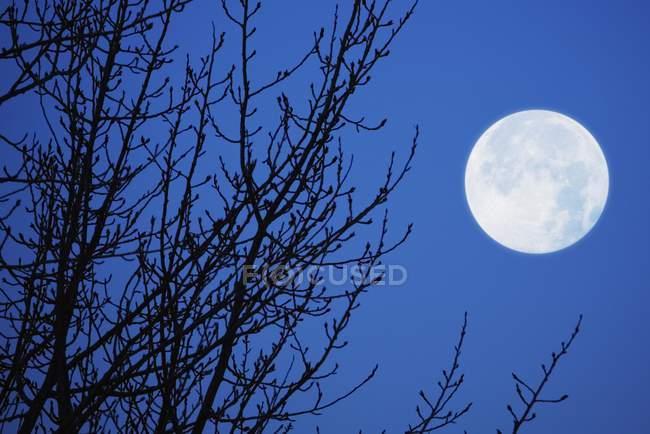 Повний місяць проти неба — стокове фото