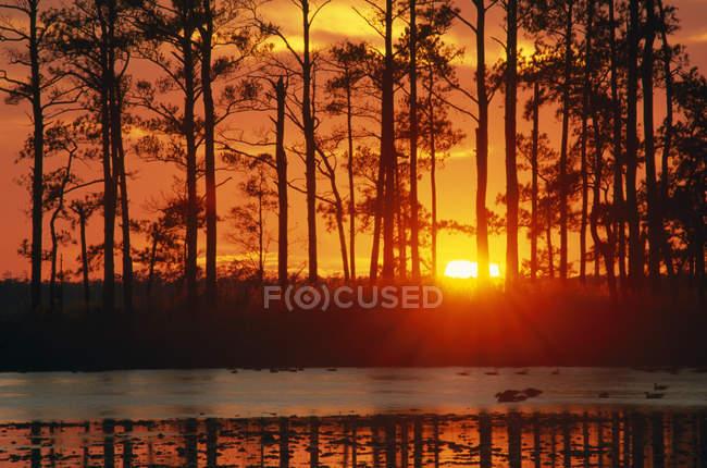 Tramonto Vista panoramica della foresta — Foto stock