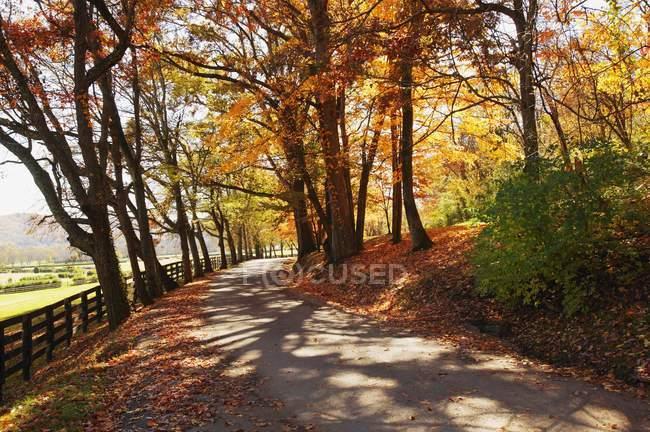 Estrada arborizada — Fotografia de Stock