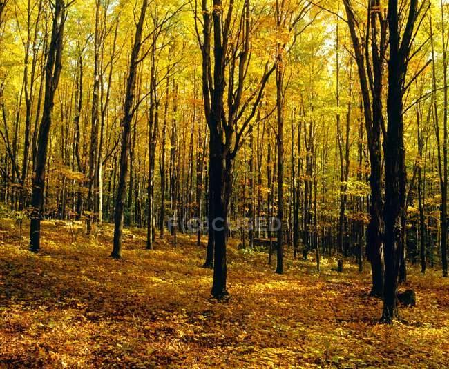 Forêt en automne avec les arbres — Photo de stock