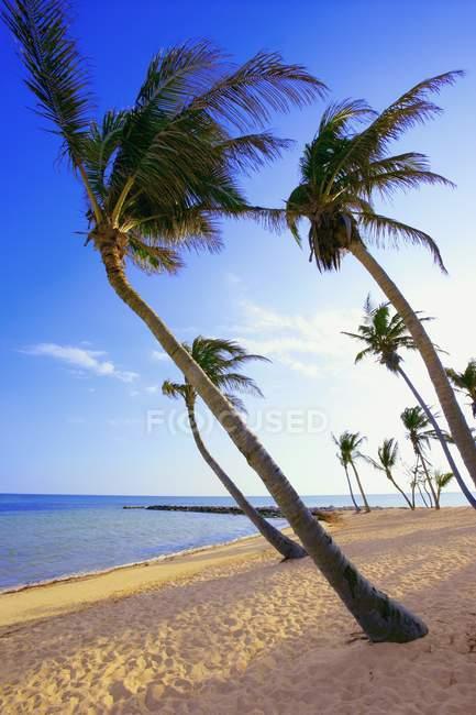 Пальмові дерева на пляжі — стокове фото