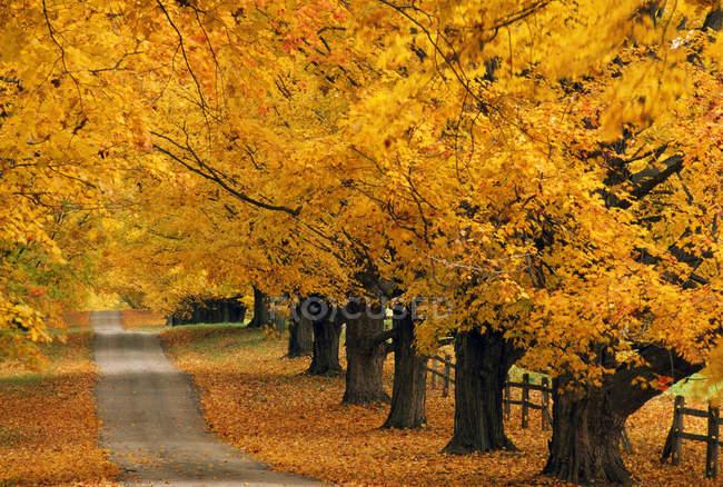 Ряды деревьев и пустой дороге — стоковое фото