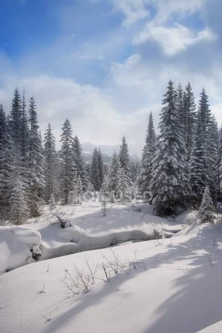 Foresta innevata — Foto stock