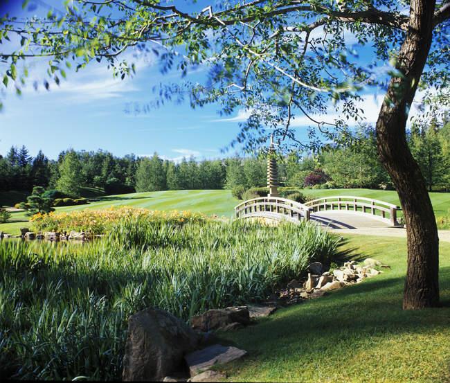 Reed lago cheio com ponte — Fotografia de Stock