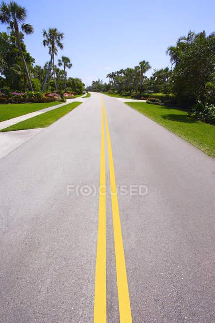 Route bordée de palmiers — Photo de stock