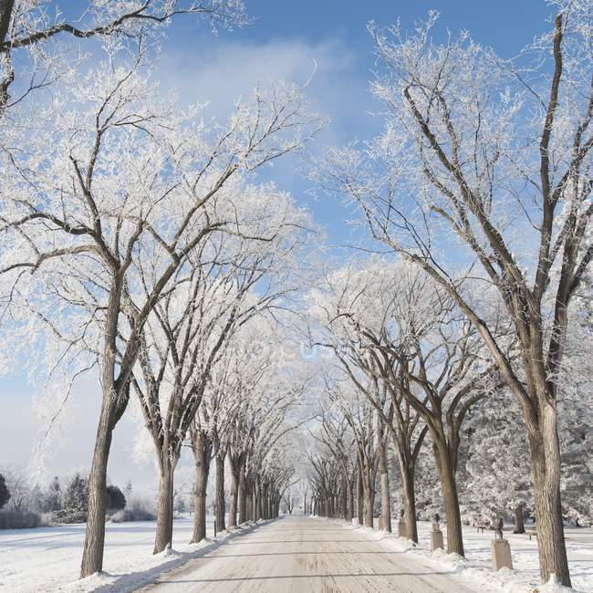 Tree-Lined Road In Winter — Stock Photo