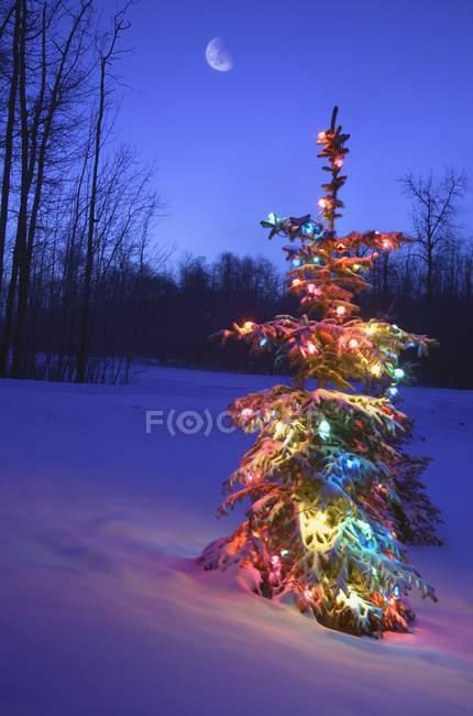 Arbre de Noël en plein air sous le clair de lune — Photo de stock