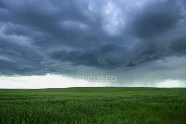 Bewölkter Himmel über Feld — Stockfoto