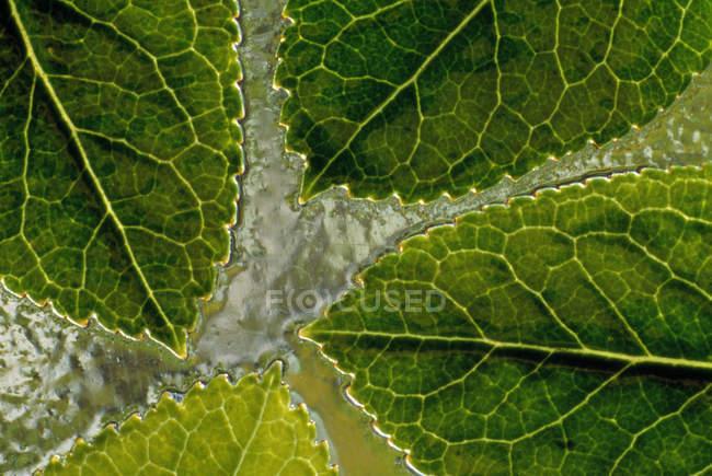 Detalle de las hojas en el agua - foto de stock
