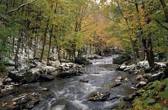 Просмотр потока в лесу — стоковое фото