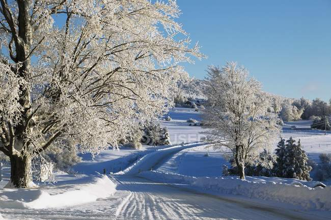 Дерева підкладку дороги в зимовий період — стокове фото