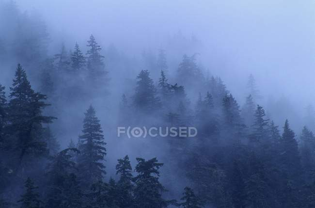 Misty Damp Forest — Stock Photo