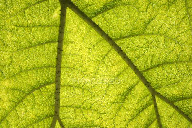 Закройте глаза на анатомию Leaf — стоковое фото