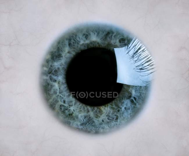 Closeup Of Blue Eye Iris And Pupil Full Frame — Stock Photo