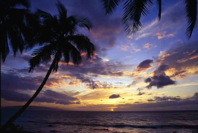 Silhouette di palme — Foto stock