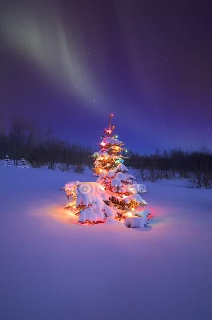 Albero di Natale sulla neve — Foto stock