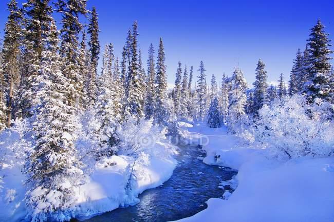 Pays des Merveilles d'hiver avec neige — Photo de stock