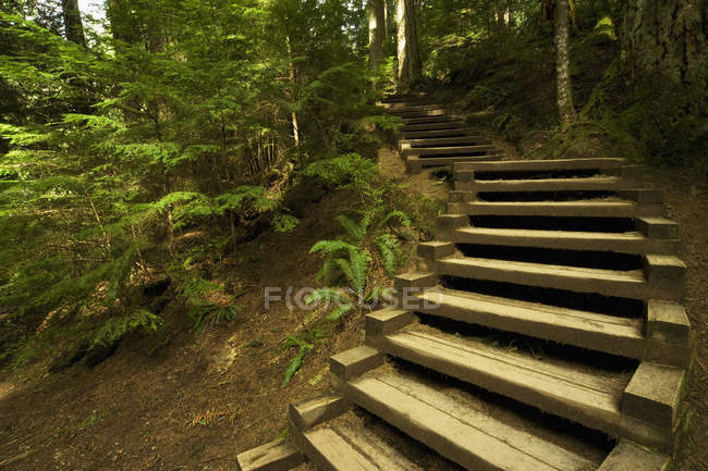 Scala In foresta pluviale — Foto stock