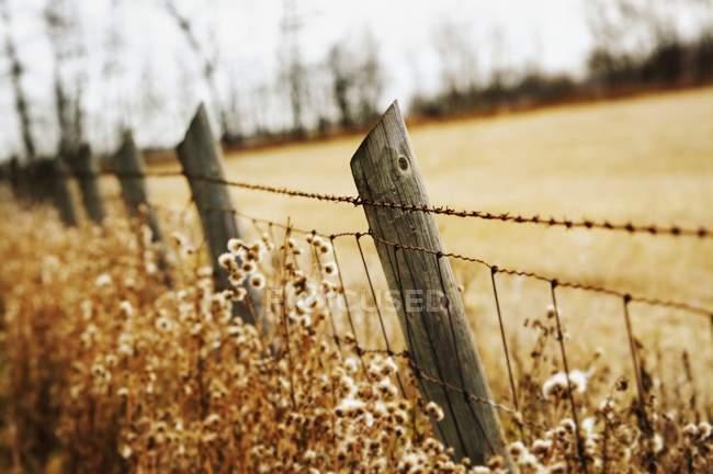 Колючая проволока — стоковое фото