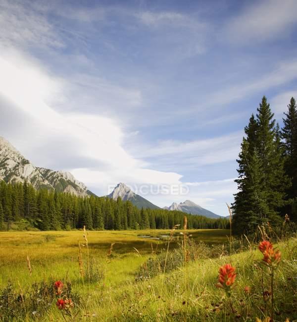 Scena di montagna durante l'estate — Foto stock