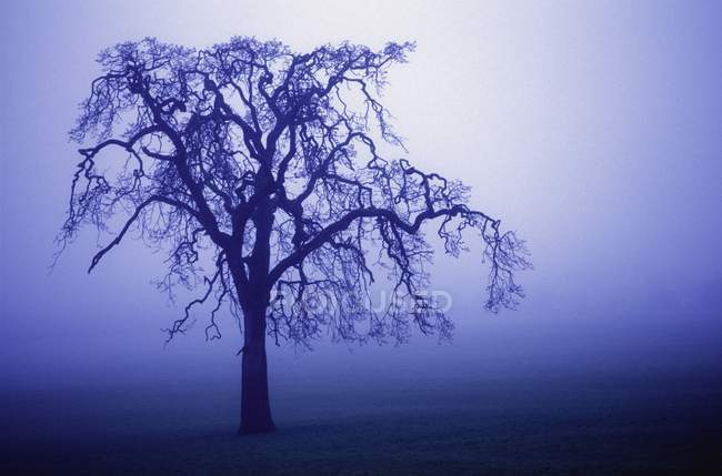 Tree Silhouette In Fog — Stock Photo
