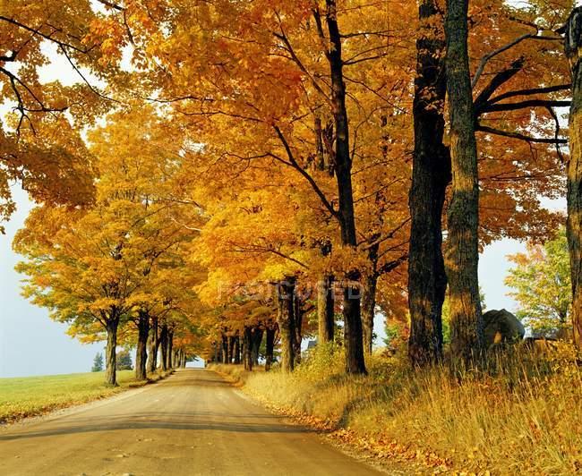 Leere Straße im Herbst — Stockfoto