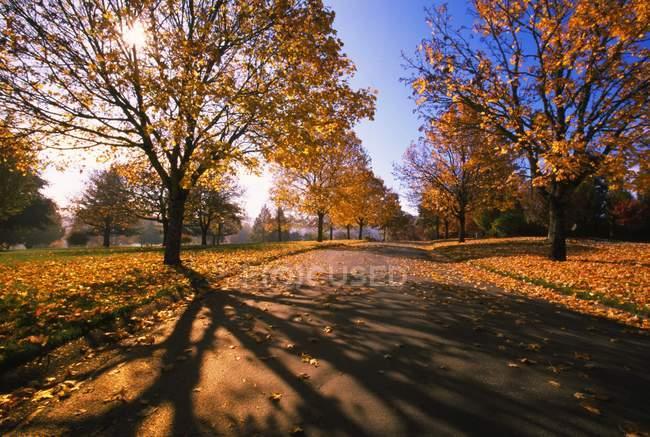 Осенние асфальтовая дорога — стоковое фото