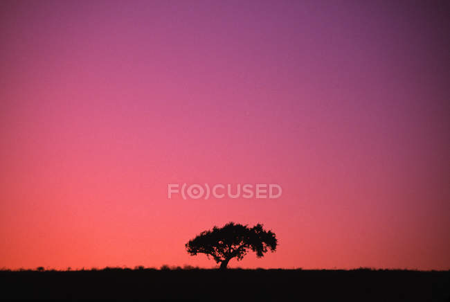 Lone Tree Backlit By Afterglow — Stock Photo