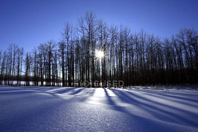 Cena de inverno com neve — Fotografia de Stock