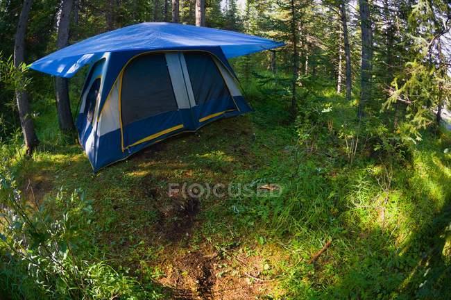 Tente Camping en forêt — Photo de stock