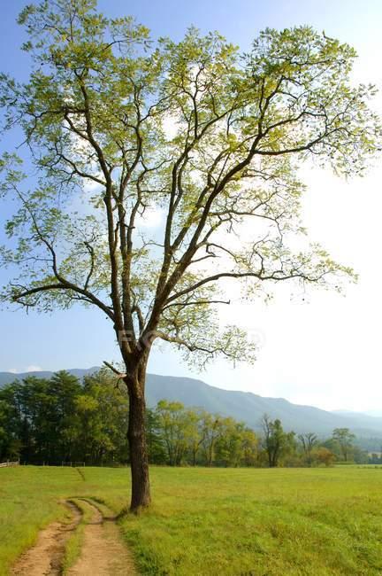 Большое дерево рядом с проезжей частью — стоковое фото