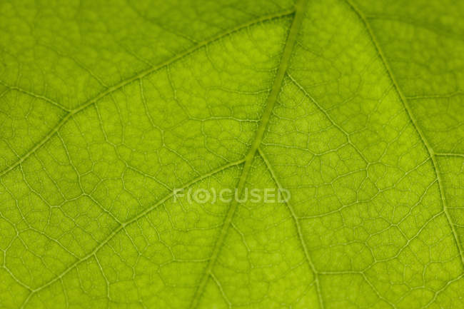 Feuille verte détail — Photo de stock