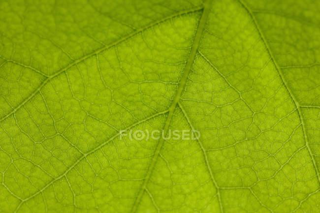 Détail de la feuille verte — Photo de stock