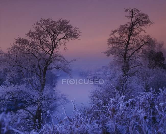 Деревья в снегу на лугу — стоковое фото