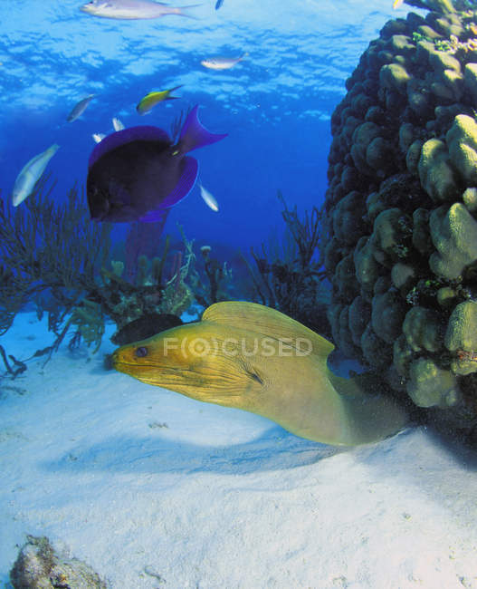 Peces y anguilas en el fondo del océano - foto de stock