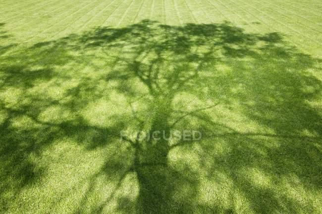 Теневое дерево на траве — стоковое фото