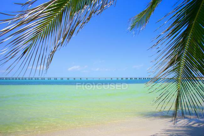 Tropical Beach, Florida Keys, Stati Uniti d'America — Foto stock