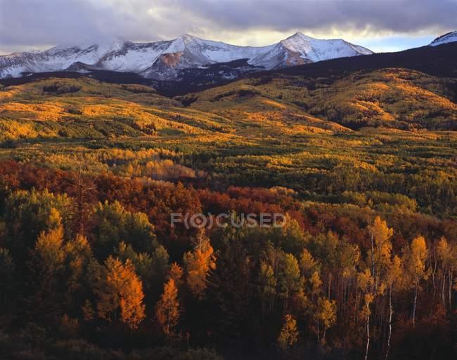 Automne Aspen Groves au coucher du soleil , — Photo de stock