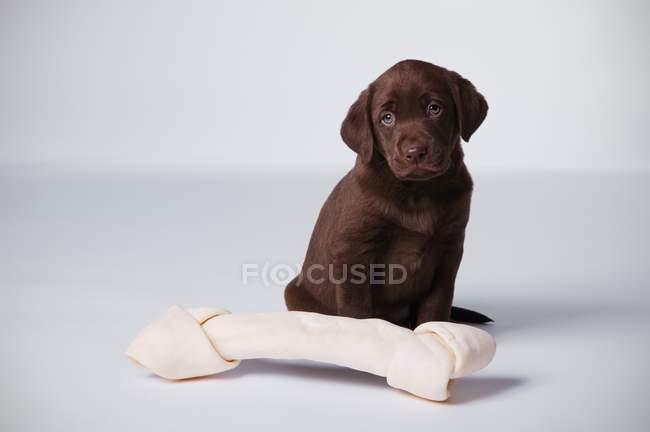 Welpe Hund sitzt auf Knochen — Stockfoto