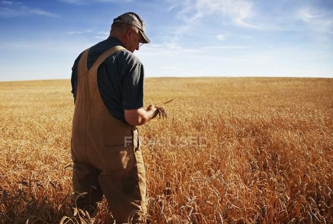 Landwirt steht auf Feld — Stockfoto